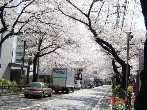 Musashino, Tokyo wwwmusashinoroimagesMusashino1jpg