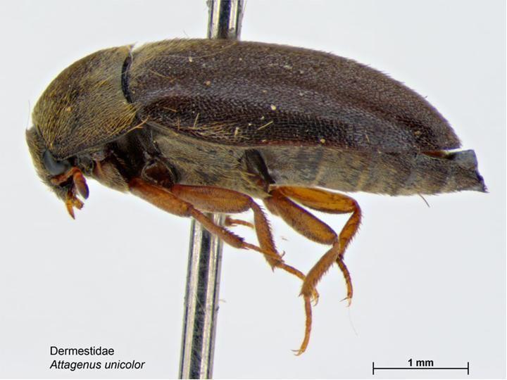 Museum integrated pest management