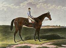 Musjid (horse) httpsuploadwikimediaorgwikipediacommonsthu