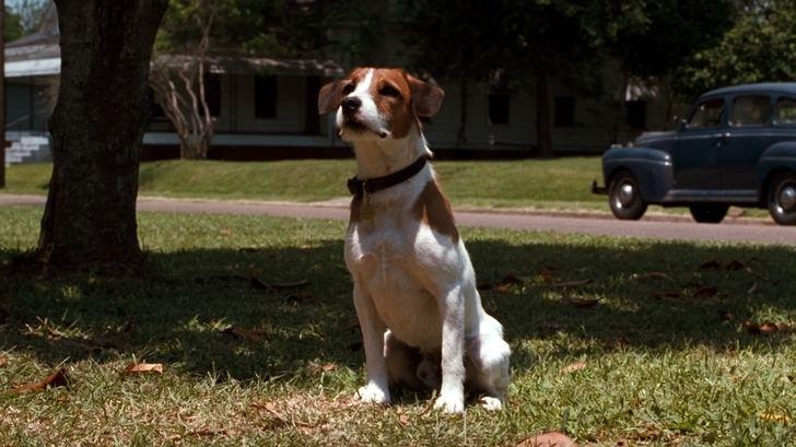 My Dog Skip (film) My Dog Skip film Alchetron The Free Social Encyclopedia