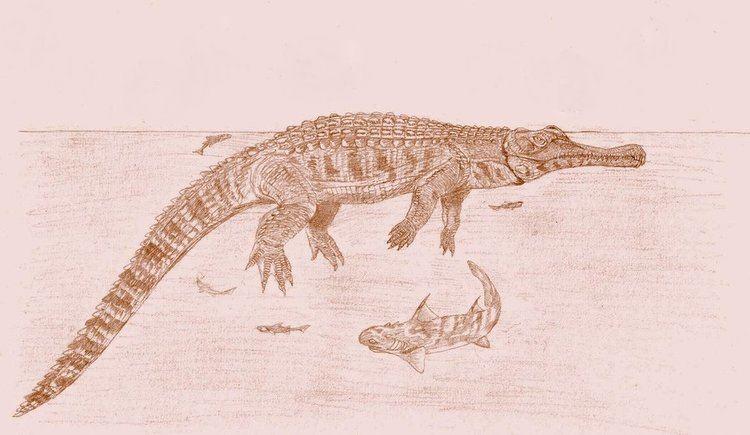Mystriosuchus img13deviantartnetcda3i2009292e4mystriosu