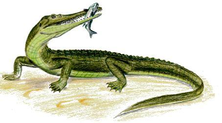 Mystriosuchus Mystriosuchus