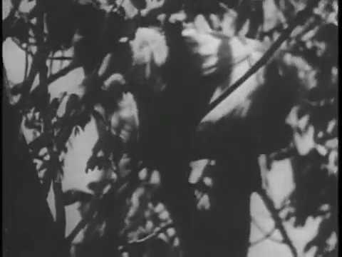 Nabonga NABONGA Gorilla 1944 Buster Crabbe Julie London Barton