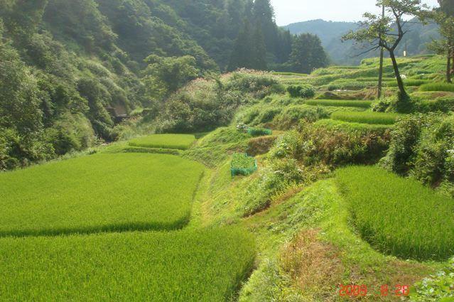 Nagano, Nagano Beautiful Landscapes of Nagano, Nagano