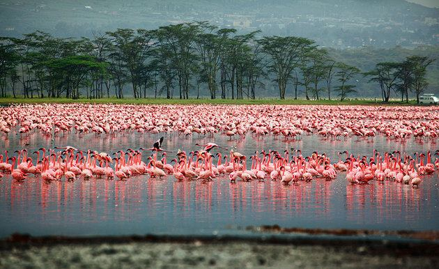 Nakuru Tourist places in Nakuru