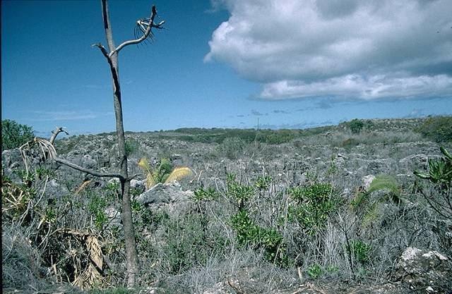 Nauru Beautiful Landscapes of Nauru
