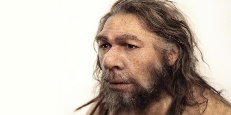 Neanderthal BBC Earth What did the Neanderthals do for us