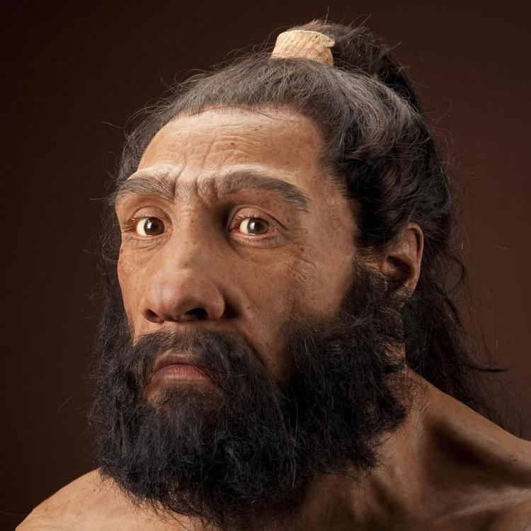 Neanderthal humanoriginssiedusitesdefaultfilesstylesful