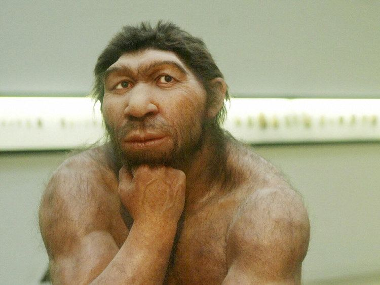 Neanderthal Modern health problems 39could have origins in Neanderthal