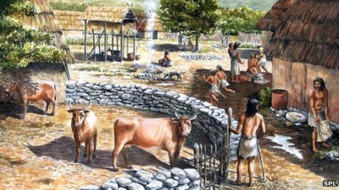 Neolithic Neolithic farmers used manure on crops BBC News