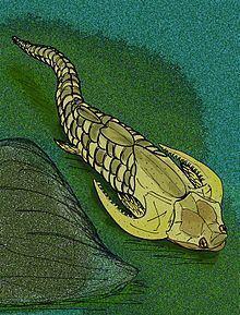 Neophlyctaenius httpsuploadwikimediaorgwikipediacommonsthu