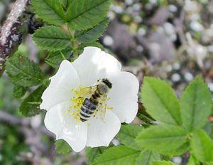Neoptera httpsuploadwikimediaorgwikipediacommonsthu