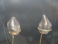 Neosodon httpsuploadwikimediaorgwikipediacommonsthu