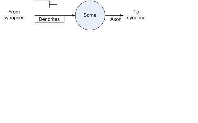 Nervous system network models