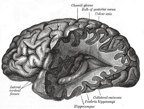 Neurotechnology