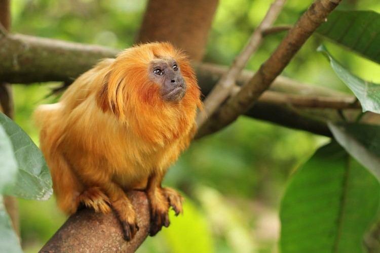 New World monkey New World monkey YouTube