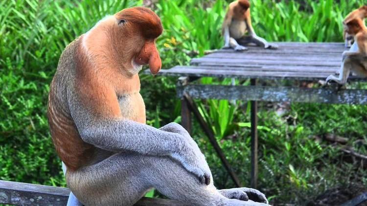 New World monkey Old World Monkeys Vs New World Monkeys YouTube