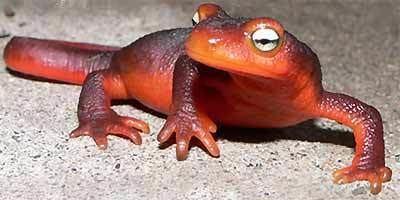 Newt Toxic Animals Around the World