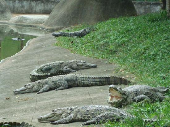 Neyyar Wildlife Sanctuary Neyyar Dam Picture of Neyyar Wild Life Sanctuary Trivandrum