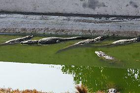 Neyyar Wildlife Sanctuary httpsuploadwikimediaorgwikipediacommonsthu