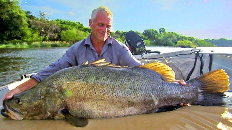Nile perch Catching A Nile Perch River Monsters YouTube