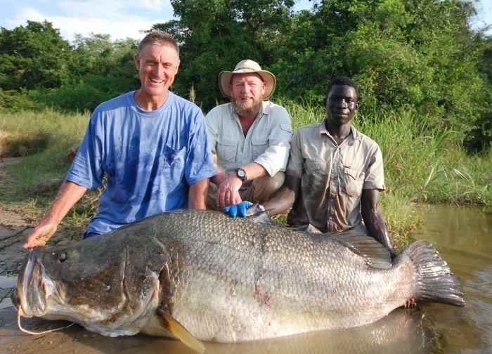 Nile perch Fishing for Nile Perch at Murchison Falls Uganda VentureCo