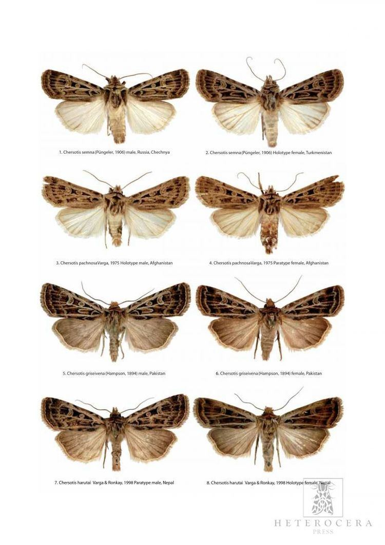Noctuinae A Taxonomic Atlas of the Eurasian and North African Noctuoidea