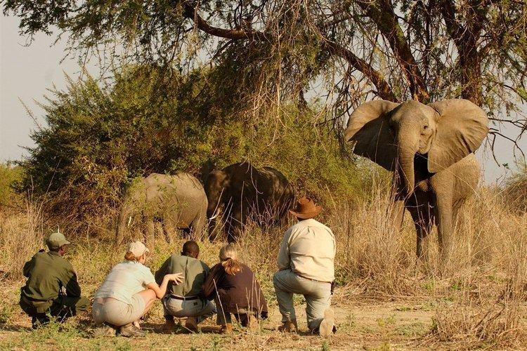 Norman Carr Norman Carr Safaris Authentic Walking Safari