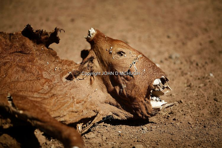 North Darfur cdncphotosheltercomimggetI0000uCNM2dIRLsIs