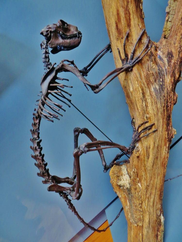 Notharctus FileNotharctus tenebrosus parisJPG Wikimedia Commons