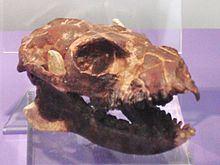 Notharctus Notharctus Wikipedia