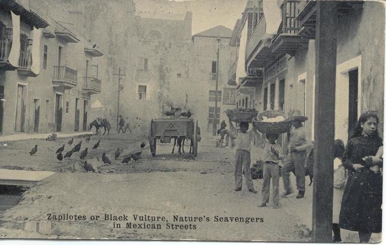 Nuevo Leon in the past, History of Nuevo Leon
