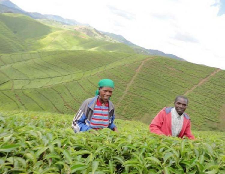 Nyaruguru District wwwnewtimescorwfilesphotos1418854132WORKER1jpg