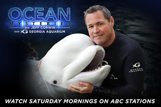 Ocean Mysteries with Jeff Corwin Ocean Mysteries Jeff Corwin Swimming Creatures of the 5th Day