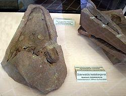 Odenwaldia httpsuploadwikimediaorgwikipediacommonsthu