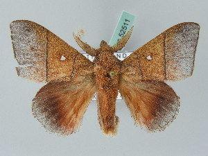 Odonestis BOLD Systems Taxonomy Browser Odonestis genus