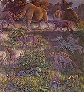Oligocene httpsuploadwikimediaorgwikipediacommonsthu