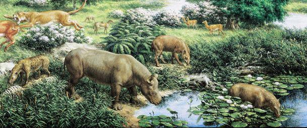 Oligocene Oligocene Perissodactyl