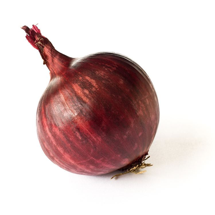 Onion httpsuploadwikimediaorgwikipediacommons99