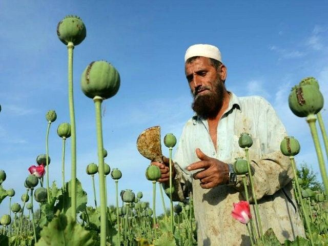 Opium Heroin Boom Afghanistan Producing 25 Times More Opium Since US