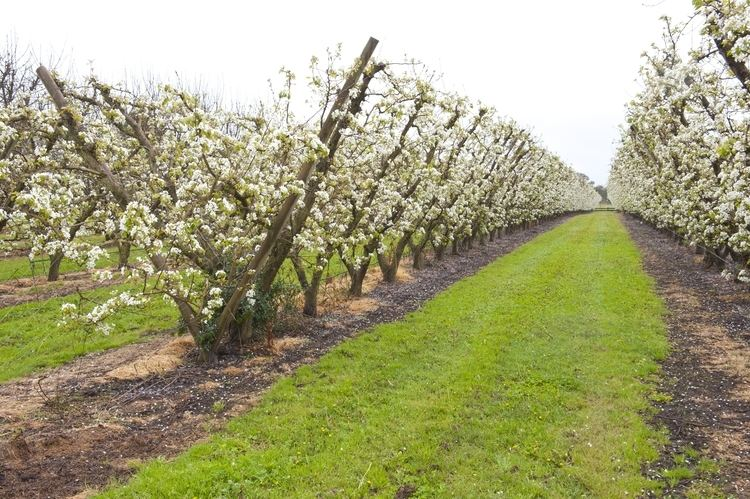 Orchard Establishing an orchard for small landholders Department of