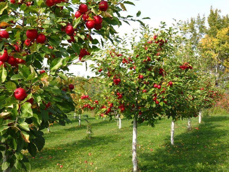 Orchard httpssmediacacheak0pinimgcomoriginals85