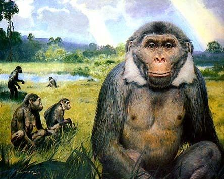 Oreopithecus When Did Our Ancestors Start to Walk on Two Feet
