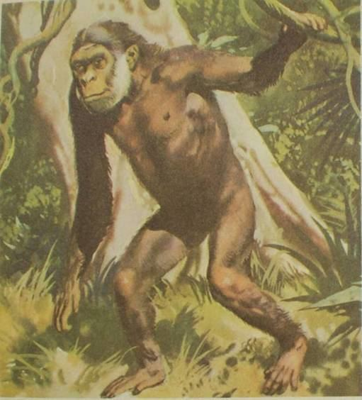 Oreopithecus None of Your Neurones Know Who You Are Reevaluation of the