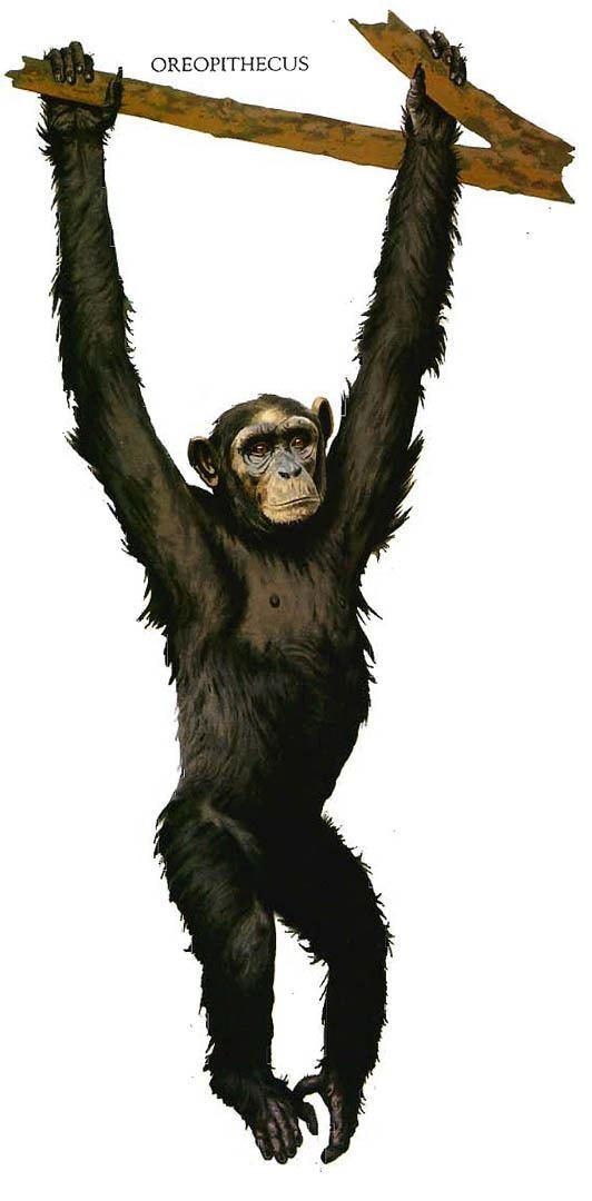 Oreopithecus Oreopithecus Chimpanzee Ape Like Dinosaurs