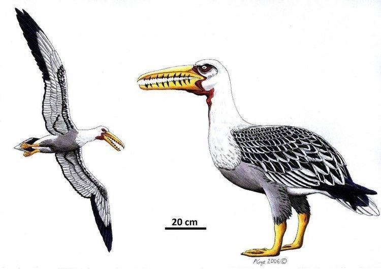 پرندگان غولپیکر