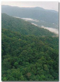 Otishi National Park wwwparkswatchorgnewsperuvistaotishijpg