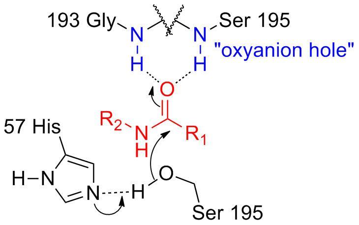 Oxyanion hole