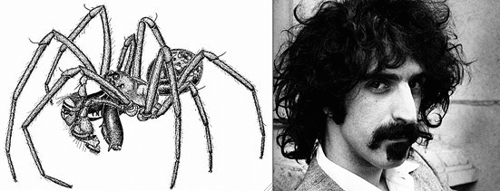 Pachygnatha zappa Spiders named after celebrities Album on Imgur