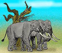 Palaeoloxodon recki httpsuploadwikimediaorgwikipediacommonsthu